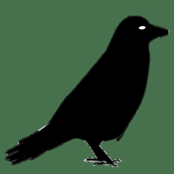 Crowlingo